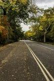 Herz im Himmel gestaltet durch bunte Baumaste im Fall in Central Park stockbild