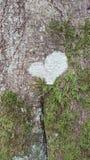 Herz im Wald Stockbilder