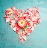 Herz machte †‹â€ ‹aus rosa blassen rosafarbenen Blumenblättern heraus auf blauem Türkishintergrund, Draufsicht lizenzfreie stockbilder