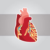 Herz medizinische 3 Lizenzfreies Stockbild
