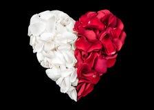 Herz Rose Petals White Red Lizenzfreies Stockfoto