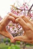 Herz und Blume Lizenzfreie Stockfotografie