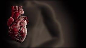 Herz und Herz schlugen Impulsvideo für medizinische Apps und Website stock video