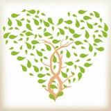 Herz vom Laub, Baumaste, wild lebende Tiere, ein Herzsymbol, Blätter werden, ein grünes Blatt gedreht, Stockfotografie