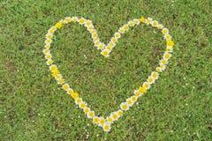 Herz von Gänseblümchenblüten Stockfotografie