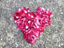 Herz von rosafarbenen Blumenblättern auf Steinhintergrund Stockbild