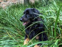 Herzchenhund lizenzfreies stockbild