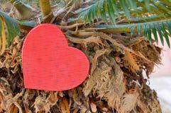 Herzform auf einer Palme Stockbild