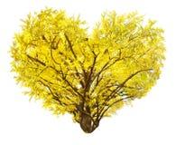 Herzform der schönen gelben Ginkgoniederlassung auf weißem Hintergrund Stockfoto