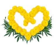 Herzform der weißen Ringelblume oder des Calendula blüht auf weißem Hintergrund Stockfotografie