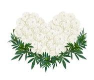 Herzform der weißen Ringelblumen- oder Calendulablume Lizenzfreie Stockbilder
