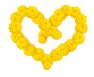 Herzform der weißen Ringelblumen- oder Calendulablume Stockbilder