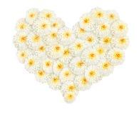 Herzform der weißen Ringelblumen- oder Calendulablume Stockbild