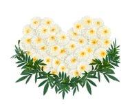 Herzform der weißen Ringelblumen- oder Calendulablume Stockfotografie