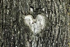 Herzform in einer Baumrinde lizenzfreie stockbilder