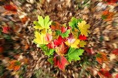 Herzform geschaffen vom schönen Herbstlaub Lizenzfreies Stockfoto