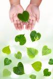Herzformblätter auf Kinderhand Stockbild
