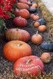 Herzlich willkommen, cucurbita pumpkin pumpkins from autumn harv Royalty Free Stock Photo