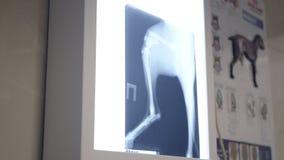 Herzschlagmonitor-Showimpuls des Patienten auf Chirurgtabelle Das Gerät ist auf dem Tisch mit Medizin und zeigt einen erhöhten Im stock footage