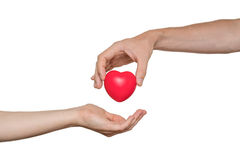 Herztransplantation und Organspendekonzept Hand gibt rotes Herz Getrennt auf weißem Hintergrund Stockfoto