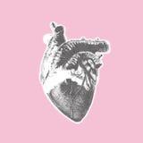 Herzweinlese Stockbilder