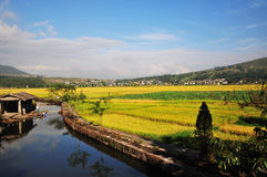 Heshun Town  in Autumn. Golden paddy in Heshun Town of Yunnan Province, a sunny day in October Stock Photography