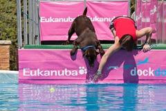 Hesitação antes de saltar? Imagens de Stock
