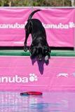Hesitation before jumping... Royalty Free Stock Image