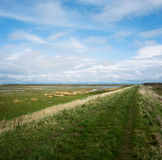 Hesketh Marsh Nature Reserve Lancashire England Royalty Free Stock Photo