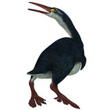 Hesperornis Profile on White. Hesperornis was a a flightless aquatic bird that lived in the Cretaceous era in Kansas and Canada Stock Photography