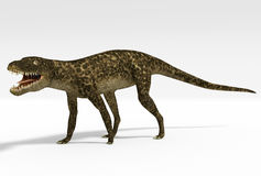 Hesperosuchus (Crocodylomorph) Royalty Free Stock Image