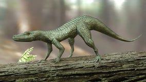 Hesperosuchus (Crocodylomorph) Stock Images