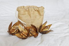 Hessian holdall and cotton squares. A display of cotton dehydrated buds with open petals showing cotton squares with a Hessian gift holdall presentation bag on a stock photography
