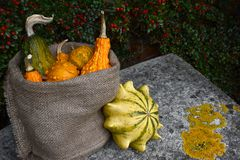 Hessian sack of ornamental gourds on a stone bench. With a Crown of Thorns outside. Copy space on lichen-covered seat royalty free stock image