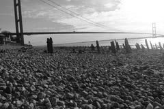 Hessle strandremsa Royaltyfria Foton