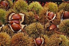 Hestnuts ¡ Ð Стоковые Фотографии RF