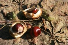 Hestnuts и листья ¡ Ð Стоковые Изображения RF