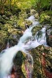 Het Åunik waterbosje Stock Foto's