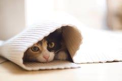 Het aan heimwee lijdende katje Stock Foto's