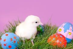 Het aanbiddelijke gele Kuiken van Pasen in gras Stock Foto