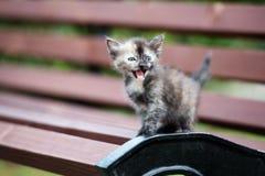 Het aanbiddelijke katje stellen op een bank stock afbeeldingen