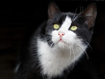 Het aanbiddelijke kleine kat kijken Stock Foto's