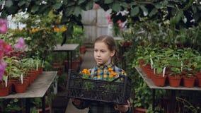 Het aanbiddelijke meisje draagt container met pottenbloemen in serre, rond bekijkend mooie bloeiende installaties stock videobeelden