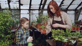 Het aanbiddelijke meisje helpt haar moeder om groene installaties met sproeier te wassen terwijl het samenwerken in boomgaard stock videobeelden