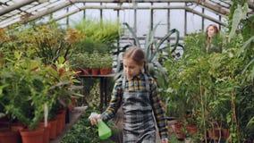 Het aanbiddelijke meisje in schort geeft bloemen met nevelfles terwijl water haar mooie moeder in serre werkt Familie stock video