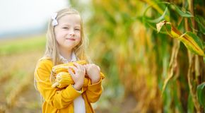 Het aanbiddelijke meisje spelen op een graangebied op mooie de herfstdag Mooi kind die een maïskolf van graan houden Het oogsten  royalty-vrije stock fotografie