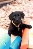 Het aanbiddelijke Puppy Beklimmen Royalty-vrije Stock Foto's