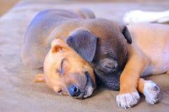 Het aanbiddelijke Puppy Slapen Royalty-vrije Stock Foto