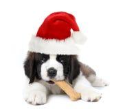 Het aanbiddelijke Puppy van de Sint-bernard van de Kerstman royalty-vrije stock afbeelding