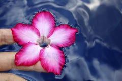Het Aanbieden van de bloem Stock Afbeeldingen